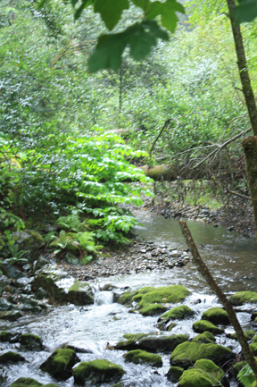 Muir Woods creek.jpg